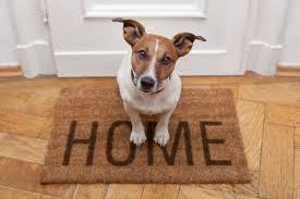 hondengeur uit huis verwijderen