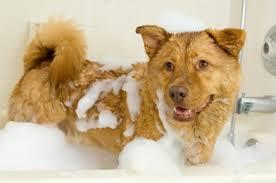 hondengeur