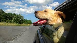 hondengeur uit auto
