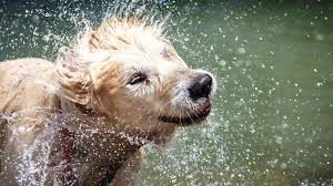 stinkende hond