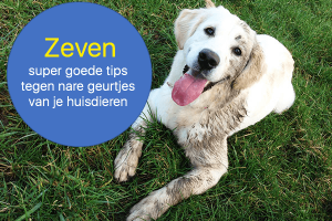 Tips tegen hondengeur