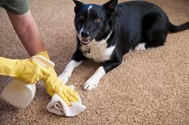 urinegeur hond verwijderen